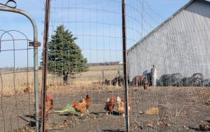 Some poultry producers in Iowa are struggling to find a place to process their birds.