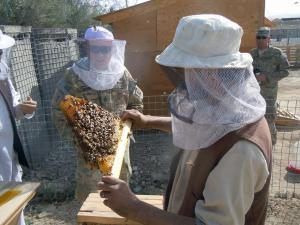 Sgt. Jay Larrew, with the Nebraska National Guard, works with an Afghan beekeeper to evaluate hive vigor.