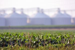 Almost all American soybeans are grown from genetically modified seeds, which are generally banned in Europe.