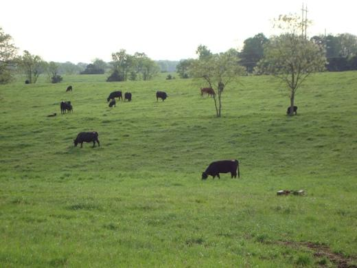 A 400-acre farm and home donated to MU is near the university's South Farm (pictured).