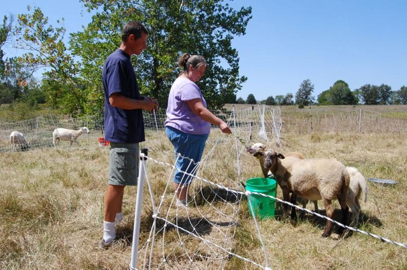 Dan and Laura Pugh wanted to graze their five new sheep on pasture. But the fields were too dry and instead they've had to buy alfalfa -- pellets and some of the fresh stuff -- to keep the sheep healthy. Soon they'll have to buy some hay.