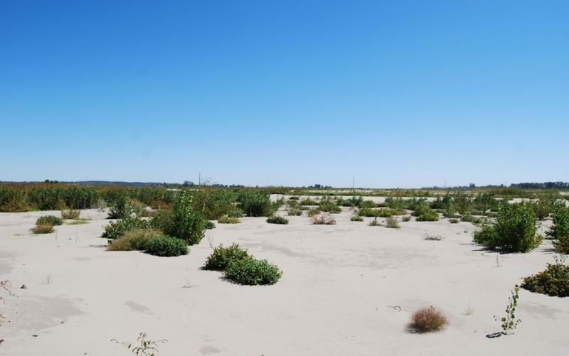 """It is pure sand dunes,"" Atchison County Sheriff Dennis Martin said, of Corning, Mo. land still covered with sand a year after surging Missouri River waters receded. ""Before the weeds started growing up, it looked like the moon."""
