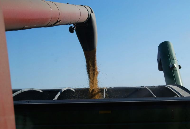 From our perch in the monster machine, we watched the beans pour from the back of the combine into the trailer alongside us.