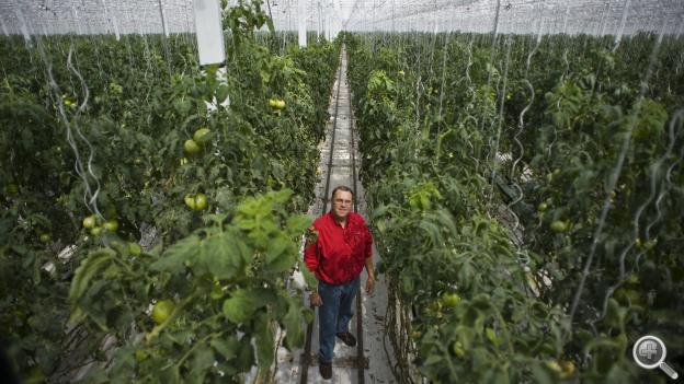 Ule Summersted is the manager of Garden Fresh Vegetables' hydroponic greenhouse in O'Neill, Neb.