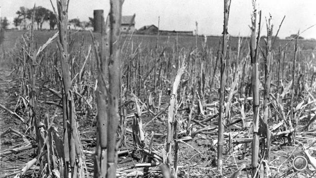 A corn field withered and broken by drought and wind in Shawnee County, Kan., 1936.