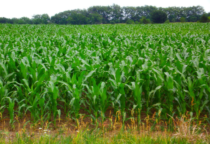 """Physics professor Andy Trupin, of Delray Beach, Fla., bought this 155-acre tract in Lebo, Kansas two years ago. He rents out the land to a local farmer who got 20 bushels of corn last year though """"the place was as dry as Las Vegas."""""""