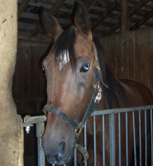 Silky Shark, a racehorse that earned over $100,000 during his racing career.