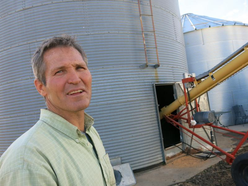 Farmer Mark Linnebur is one of the first farmers to grow Snowmass wheat alongside red wheat varieties at his Beyers, Colo., farm.