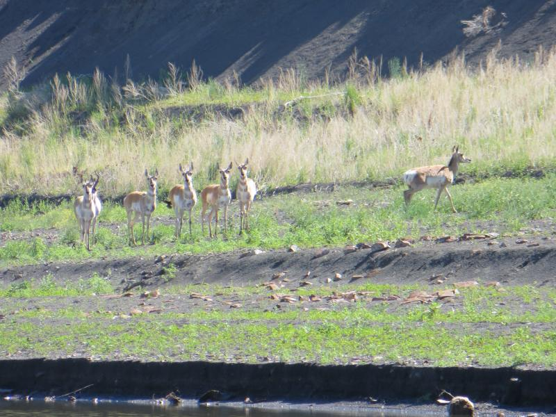 Moreland honed her photography skills on the river. She saw a wide range of Missouri River wildlife including these deer.