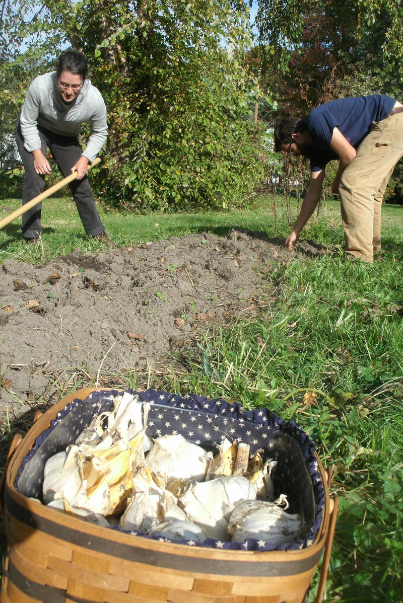 In this debut of the new KBIA gardening segment Farm Your Yard, Carrie Hargrove and husband Billy Polansky prepare a bed in mid-October in their home garden for planting garlic.