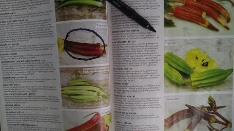 Perusing seed catalogs can lead to bouts of daydreaming of warm days in next year's garden.