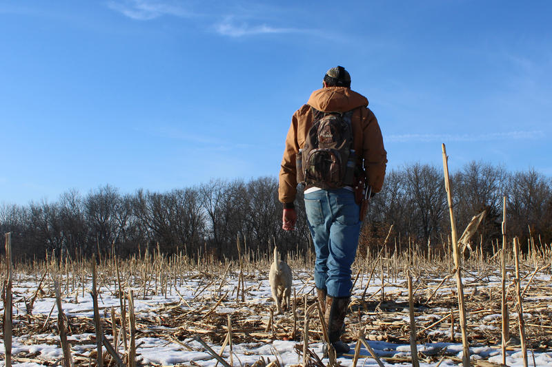 Kyle Kenison and his dog, Luke, walk through rows of cornstalks searching for deer antlers Friday, March 6, 2015 in Monroe City, Missouri. Kenison and many other mid-Missourians devote hours to searching for sheds.