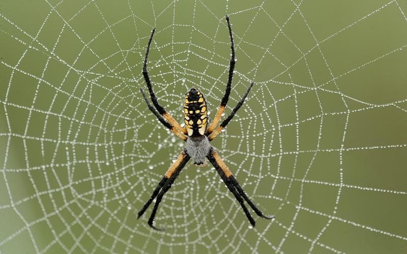 Discover Nature: Spiders Spinning Webs | KBIA