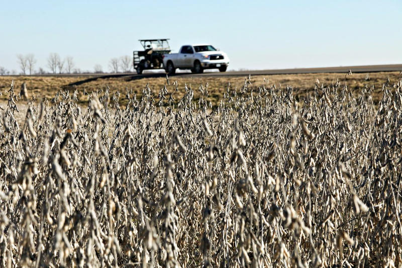 A truck drives on top of a levee that protects a soybean field in New Madrid County, Mo. when the Mississippi River floods.