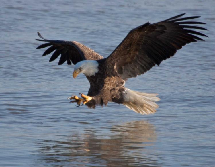Discover Nature Bald Eagles Kbia