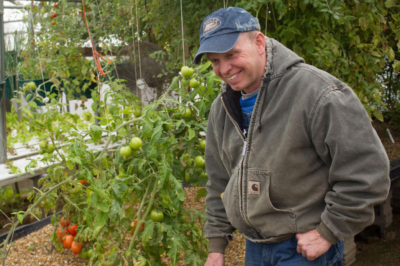 In the aquaponics greenhouse at Early Morning Harvest, Jeff Hafner can grow tomatoes, lettuce and other produce year-round, though he has to adjust the varieties as the indoor temperature and humidity change throughout the year.