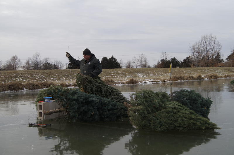 An MDC employee stands atop a frozen pond and attaches Christmas trees to cinderblocks for fish habitat when the ice melts.