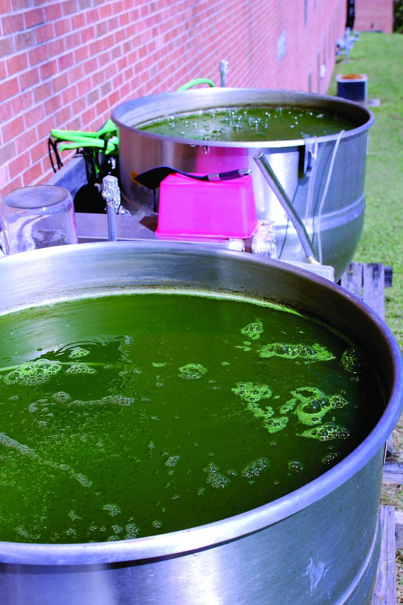 Algae tanks