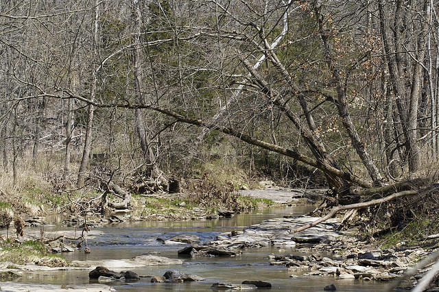Thousands of fish were found dead in Columbia's Flat Branch Creek.
