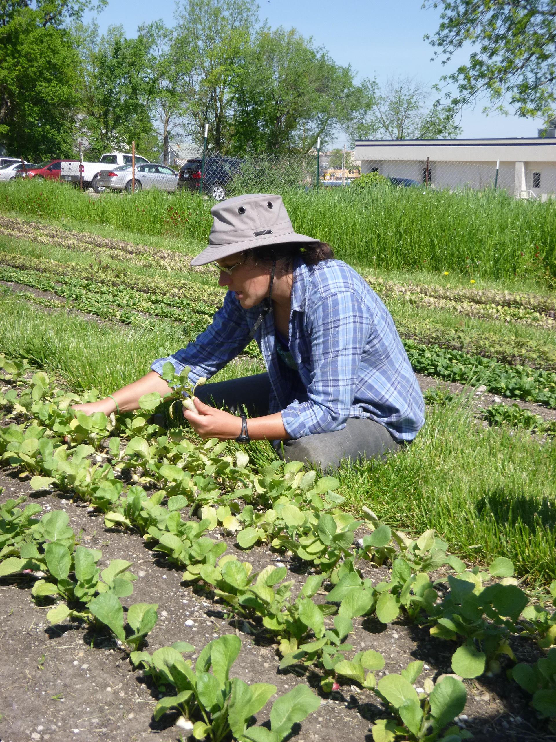 Farm Your Yard: Planting fall garlic | KBIA