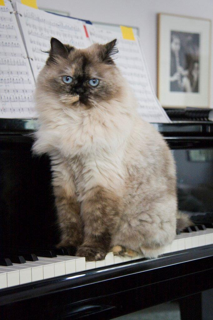 Phoebe's Been Making Music