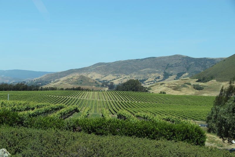 Wolff Vineyards in Edna Valley started planting back in the mid 1970s