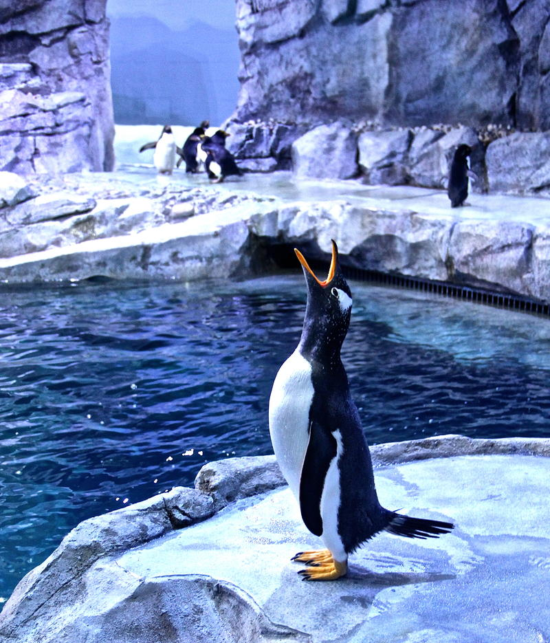 Penguin at Detroit Zoo