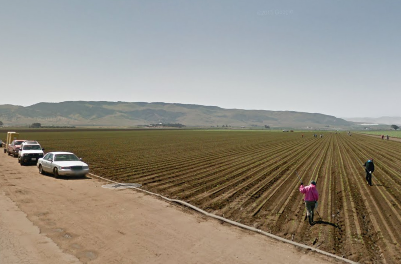 Field workers tend to a crop just west of Santa Maria.
