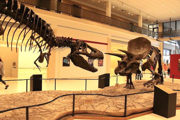 Dinosaurs at Texas Tech university