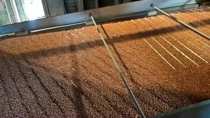 Pinquito Beans