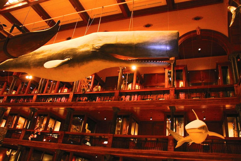 Legendary whale at Bishop Museum