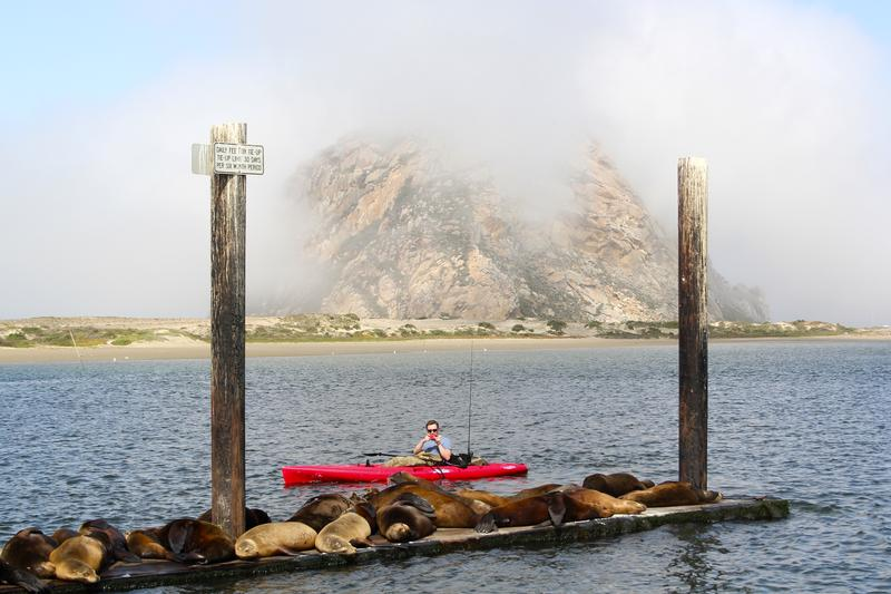 Sea Lions resting in Morro Bay Harbor