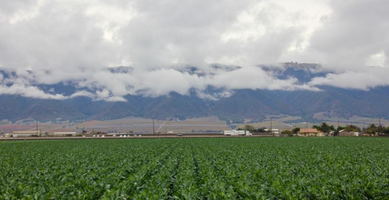 In the Salinas Valley, agriculture and urban life abut.