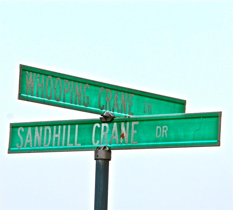 Sandhill Cranes stree signs in Kearney Nebraska