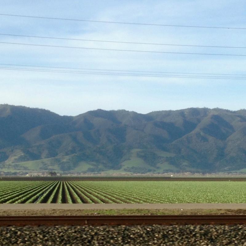 Salines Valley fields.