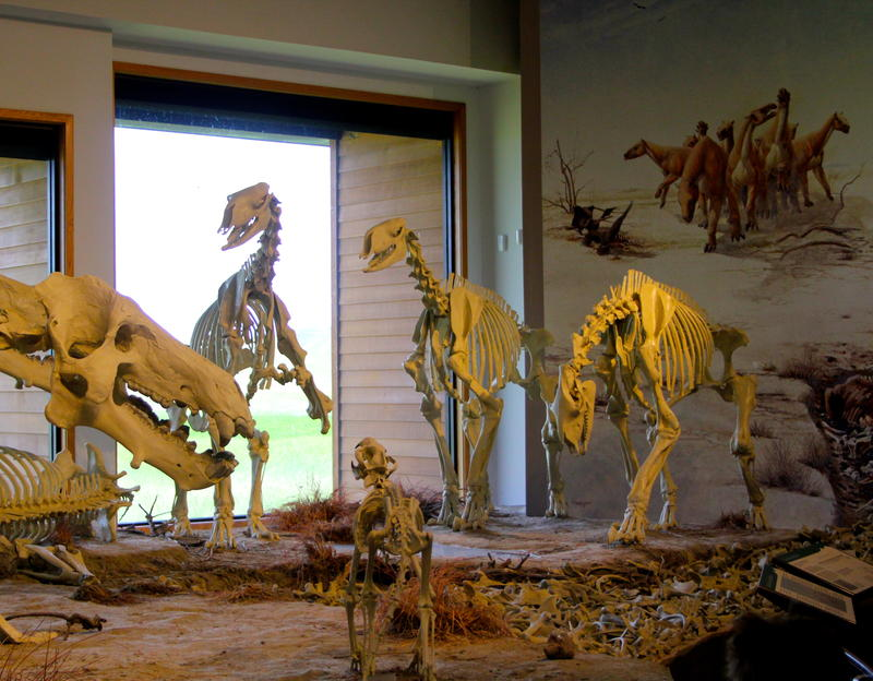 Diorama display of 23 million year old Mammals at the visitor center.