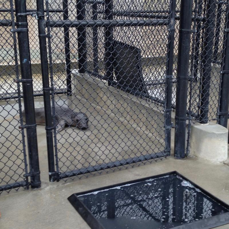 """Sea Noodle,""  shown here in one of the holding pens at the Marine Mammal Center Morro Bay, was found in a distressed condition on Avila Beach."