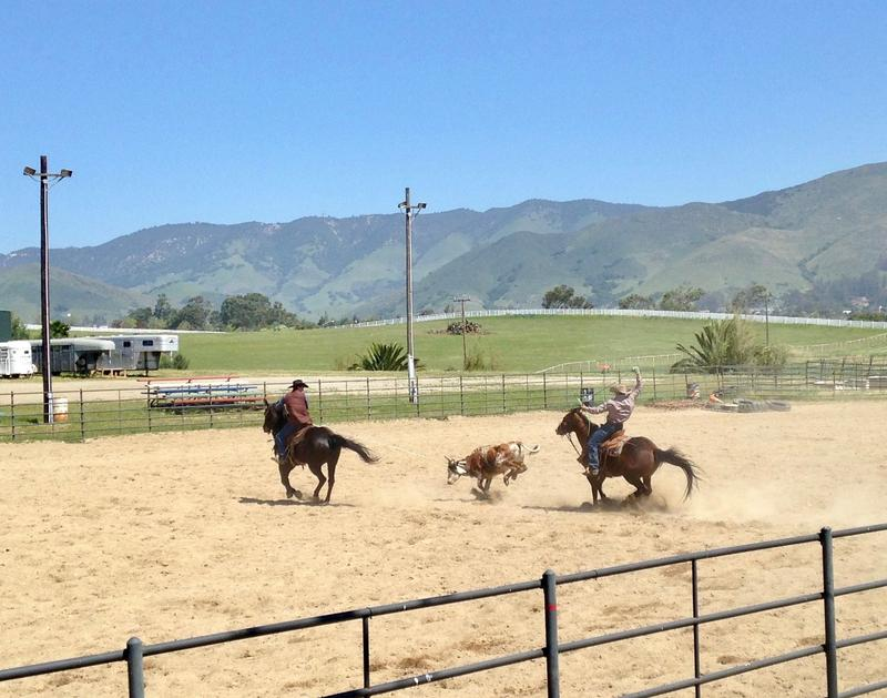 Cuesta College rodeo team members practice team roping.