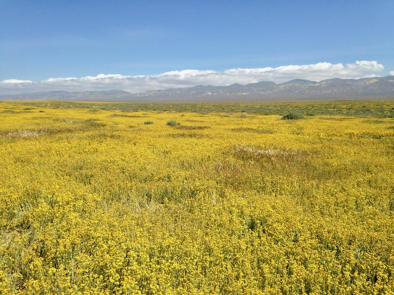 The Carrizo Plain.