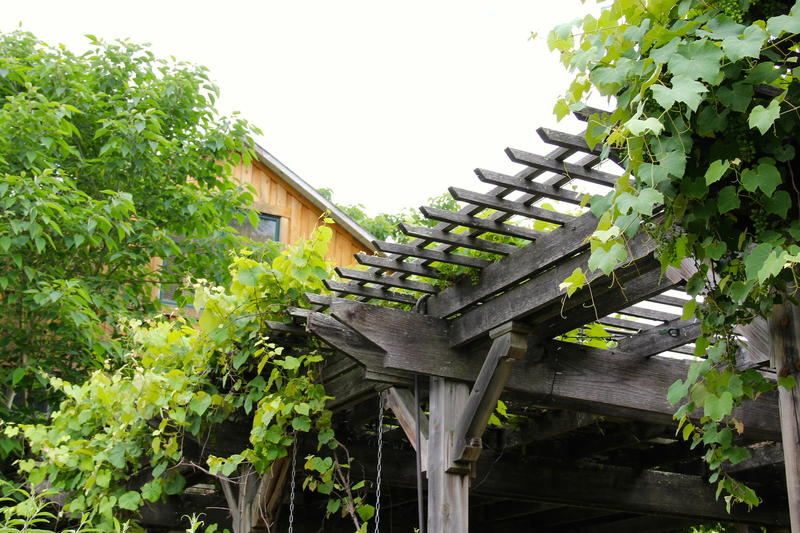 grape vines on the arbor at Heartstone & South River Highlands Retreat Center