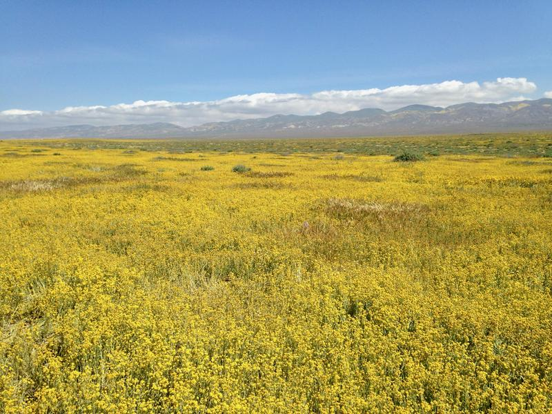 A view from the Carrizo Plain in southeast San Luis Obispo County.