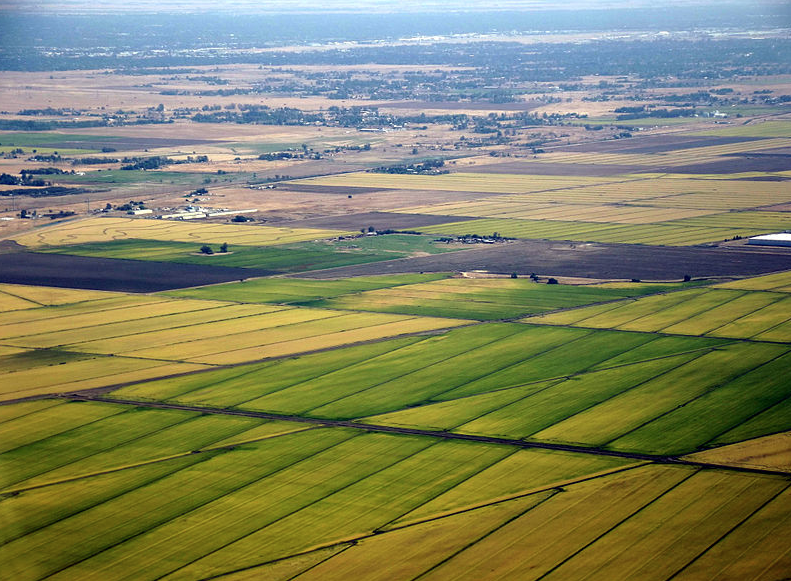 An aerial view of rice fields near Sacramento.