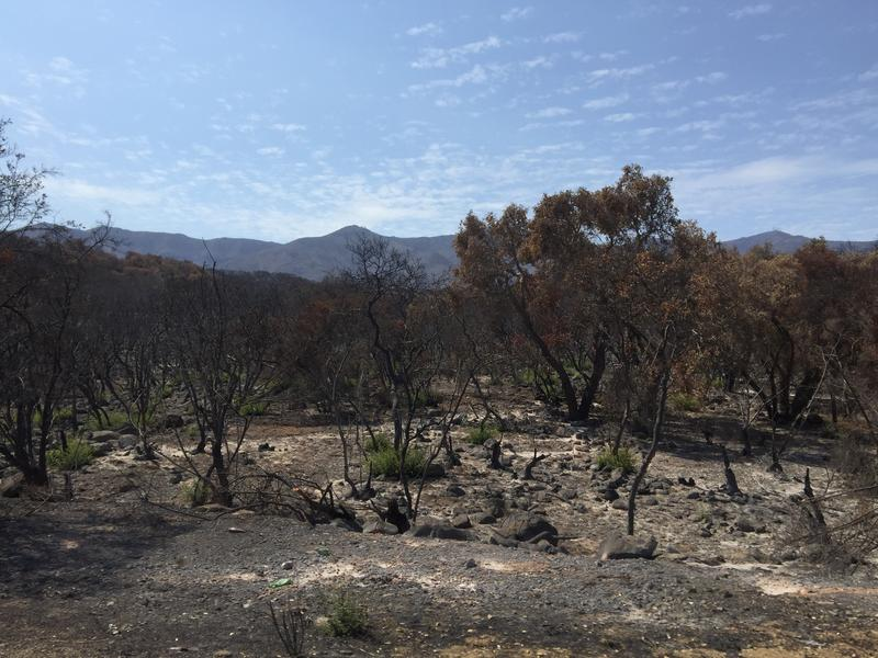 Areas adjacent to Highway 154 burned in the 2017 Whittier Fire are at risk for flooding.