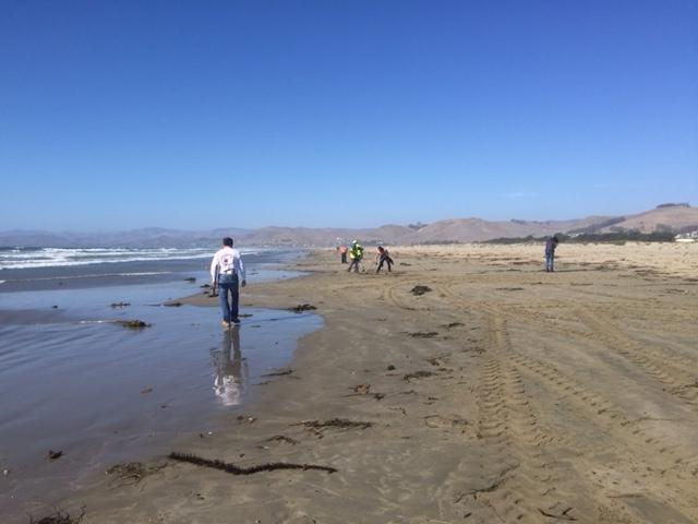 Workers clean up oil washed up on Morro Rock Beach on Saturday afternoon.