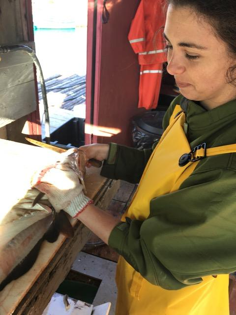 Corespondent Rebekah Nolan cutting out her first cod tongue.