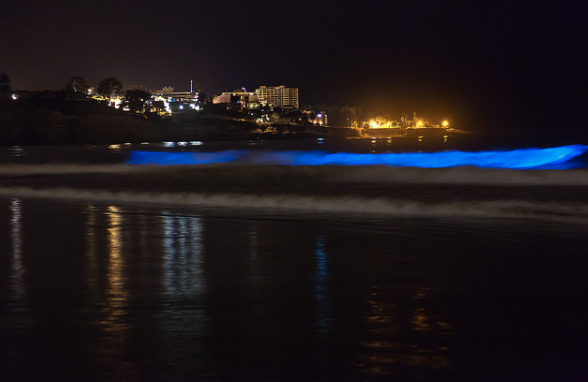 Bioluminescence in waters near La Jolla, California in 2011.