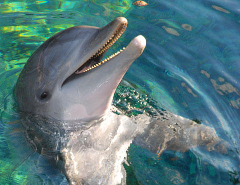 Lovable Liko at Dolphin Quest Hawaii.