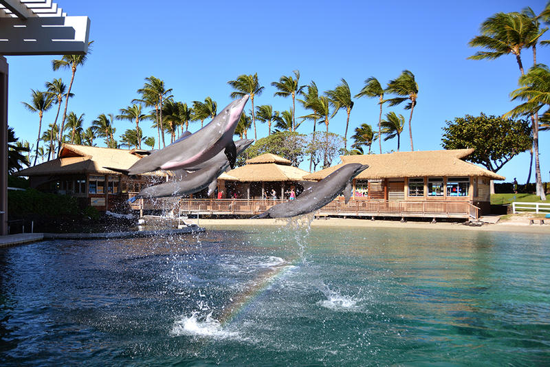 Dolphin Quest Hawaii at Hilton Waikoloa Village.
