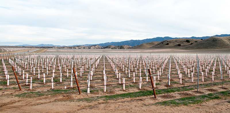 In 2014, Harvard University's endowment fund planted hundreds of acres of wine grapes in the Cuyama Valley.