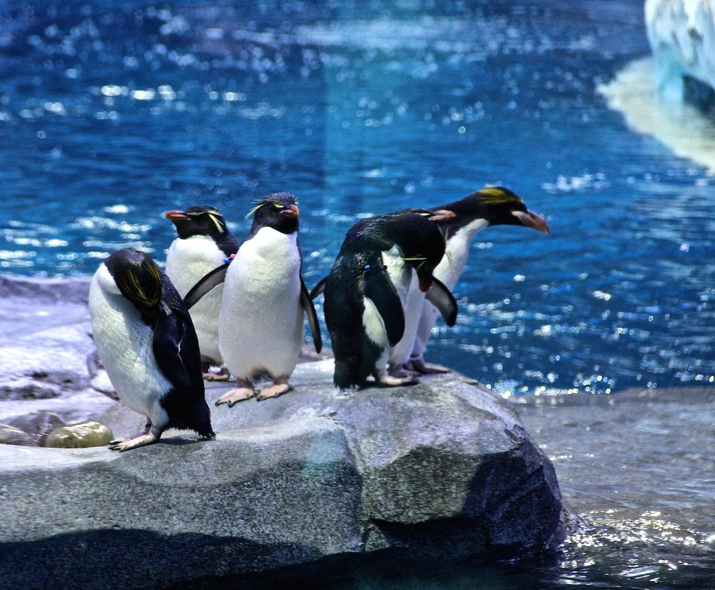 Zoo Penguin 2 Voice - Happy Feet (Movie) | Behind The ... |Happy Feet Zoo Aquarium
